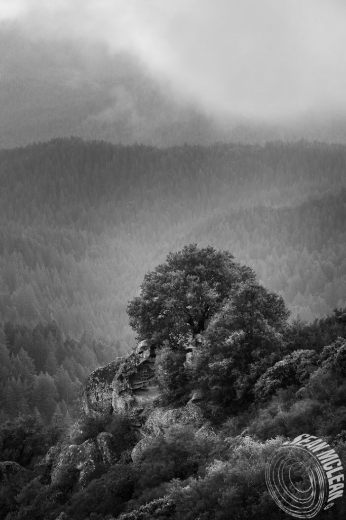 View  from Goat Rock in Black And White